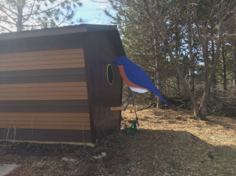 Happy the Bluebird a